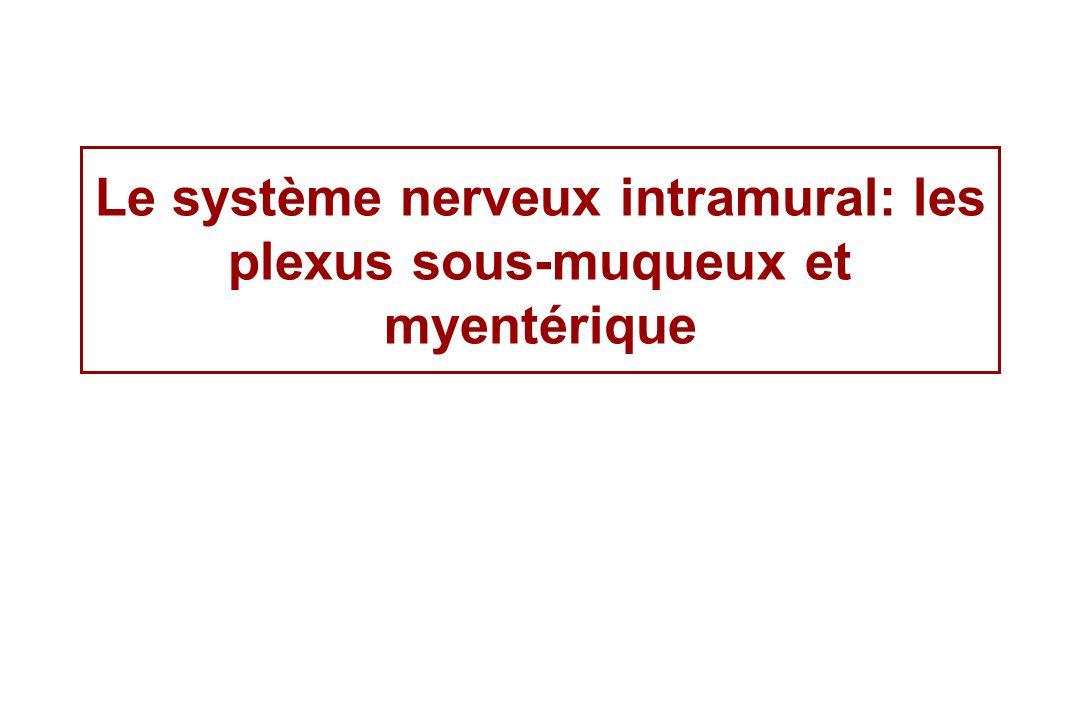 Les cellules de Cajal assurent le relais entre linnervation intrinsèque intramurale et la musculature lisse varicosités axonale Les neurotransmetteurs diffusent à partir des varicosités axonales vers les cellules interstitielles de Cajal (organisation synaptique dite en passage) Cellule de Cajal Muscle lisse Innervation extrinsèque