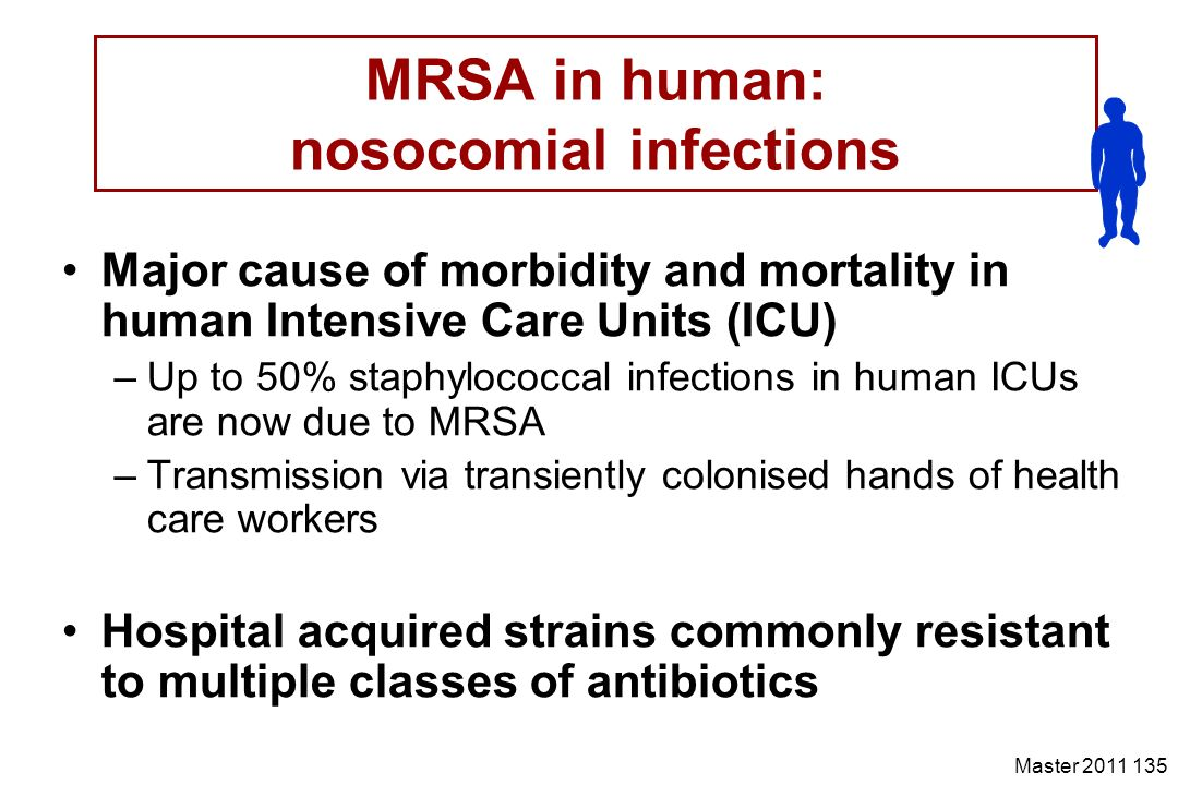 Master 2011 135 MRSA in human: nosocomial infections Major cause of morbidity and mortality in human Intensive Care Units (ICU) –Up to 50% staphylococ