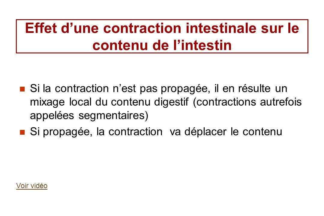 Effet dune contraction intestinale sur le contenu de lintestin Si la contraction nest pas propagée, il en résulte un mixage local du contenu digestif
