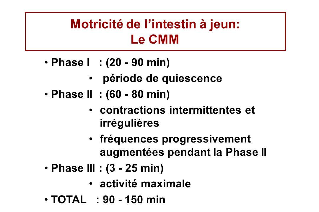 Motricité de lintestin à jeun: Le CMM Phase I : (20 - 90 min) période de quiescence Phase II : (60 - 80 min) contractions intermittentes et irrégulièr