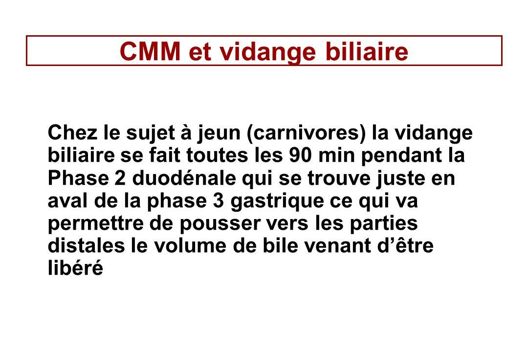 CMM et vidange biliaire Chez le sujet à jeun (carnivores) la vidange biliaire se fait toutes les 90 min pendant la Phase 2 duodénale qui se trouve jus