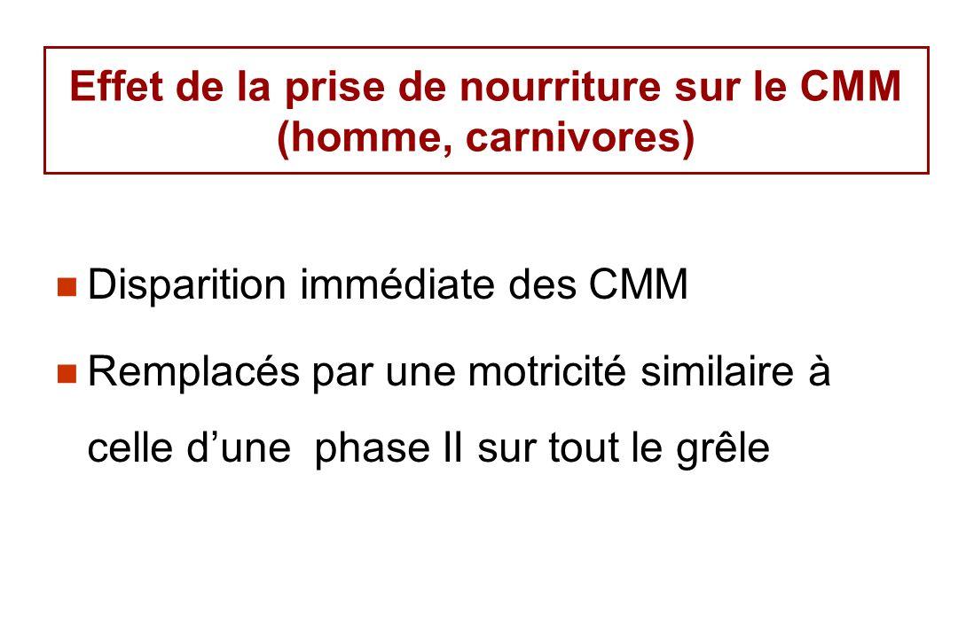 Disparition immédiate des CMM Remplacés par une motricité similaire à celle dune phase II sur tout le grêle