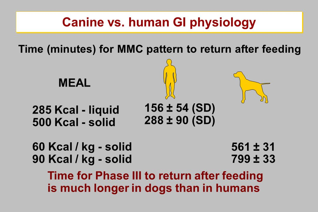 285 Kcal - liquid 500 Kcal - solid 60 Kcal / kg - solid 90 Kcal / kg - solid Time for Phase III to return after feeding is much longer in dogs than in
