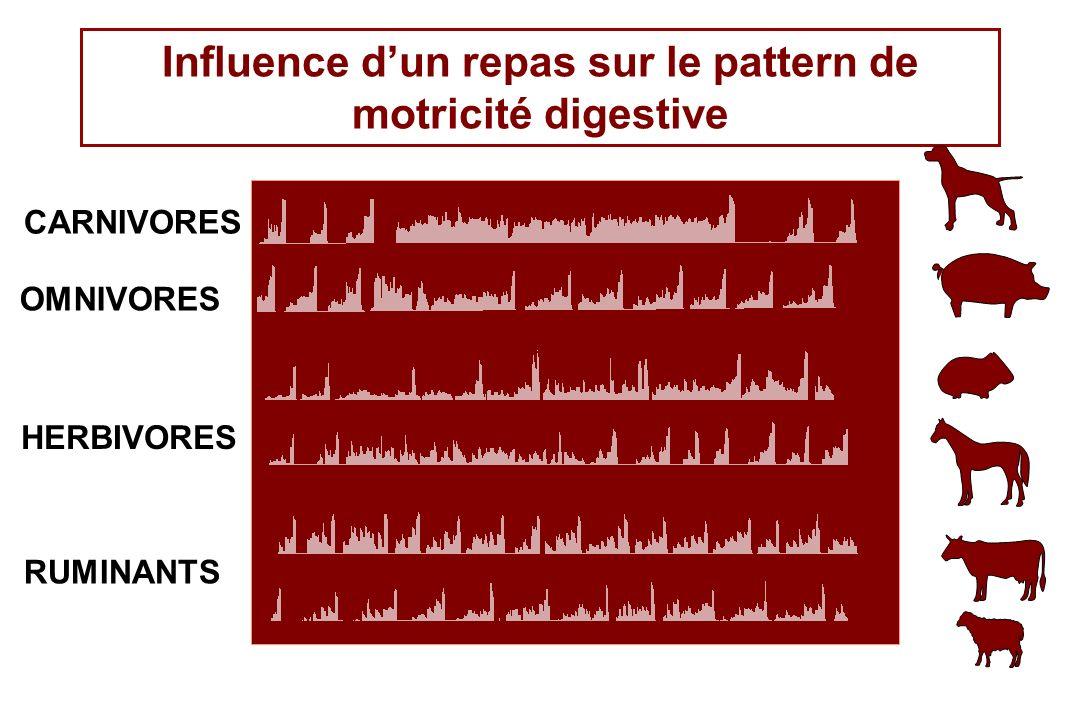 OMNIVORES HERBIVORES RUMINANTS CARNIVORES Influence dun repas sur le pattern de motricité digestive