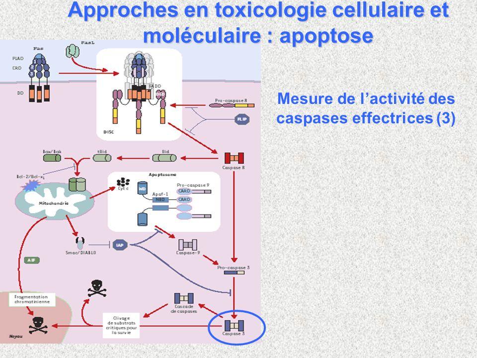 Mesure de lactivité des caspases effectrices (3) Approches en toxicologie cellulaire et moléculaire : apoptose