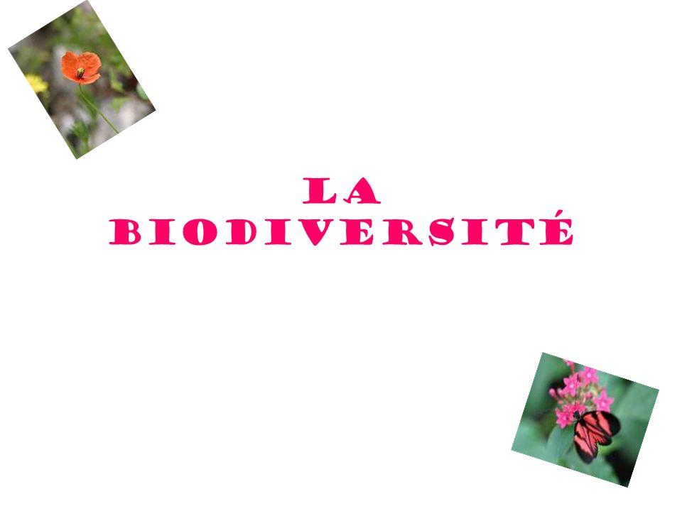 Quest-ce que que la biodiversité .