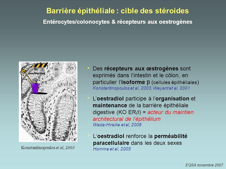 Konstantinopoulos et al, 2003 Barrière épithéliale : cible des stéroides Entérocytes/colonocytes & récepteurs aux oestrogènes Des récepteurs aux œstro