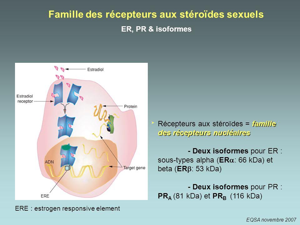 Famille des récepteurs aux stéroïdes sexuels ER, PR & isoformes famille des récepteurs nucléaires Récepteurs aux stéroïdes = famille des récepteurs nu