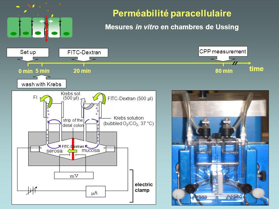 Set up CPP measurement time 0 min 5 min20 min80 min wash with Krebs FITC-Dextran strip of the distal colon FITC-Dextran Krebs solution (bubbled O 2 /C