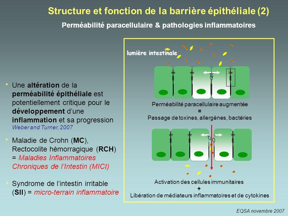 Structure et fonction de la barrière épithéliale (2) Perméabilité paracellulaire & pathologies inflammatoires Perméabilité paracellulaire augmentée =