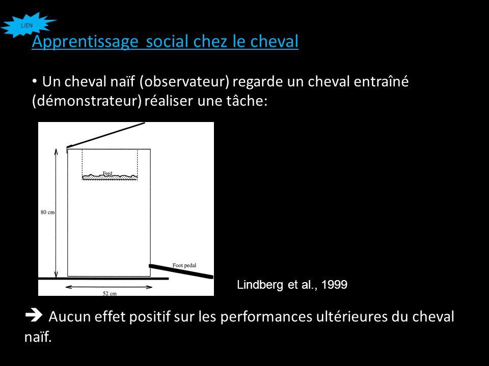Apprentissage social chez le cheval Lindberg et al., 1999 Un cheval naïf (observateur) regarde un cheval entraîné (démonstrateur) réaliser une tâche: