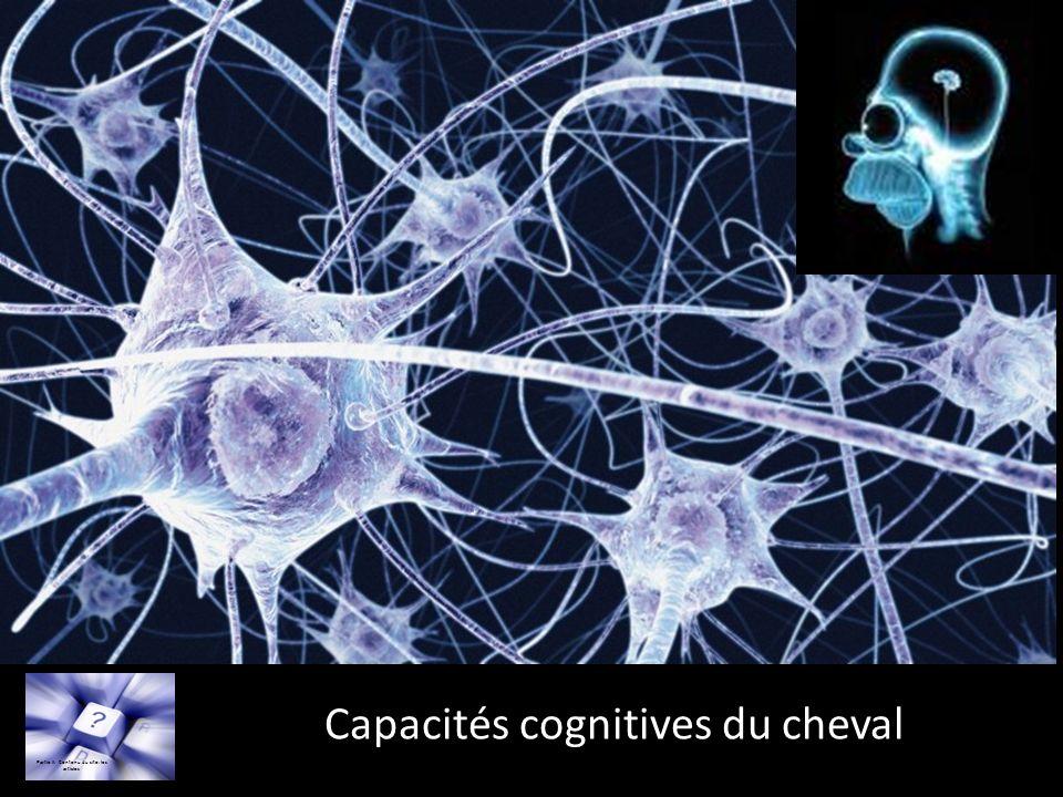 Capacités cognitives du cheval Partie II: Contenu du site: les articles