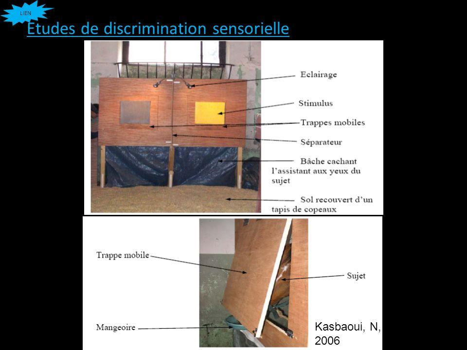 Etudes de discrimination sensorielle LIEN Kasbaoui, N, 2006