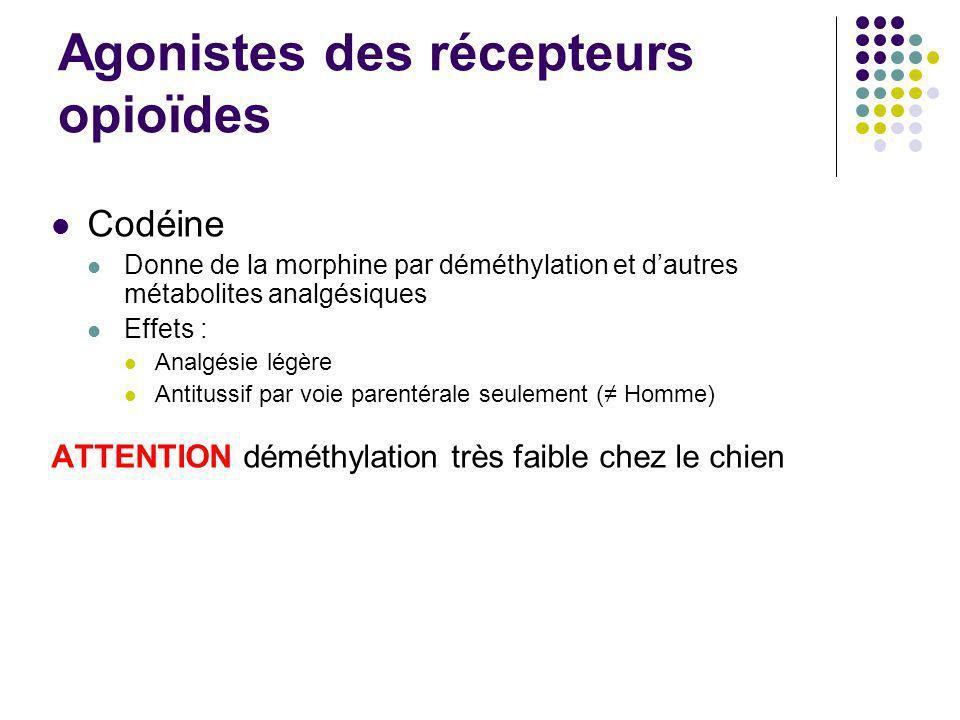 Agonistes des récepteurs opioïdes Codéine Donne de la morphine par déméthylation et dautres métabolites analgésiques Effets : Analgésie légère Antitus