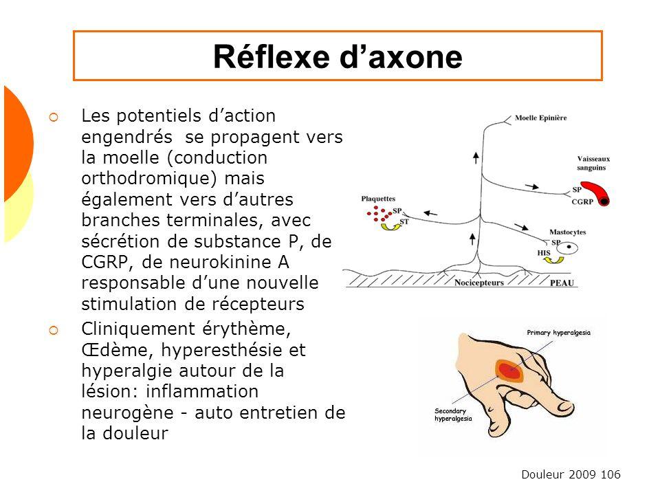 Douleur 2009 106 Réflexe daxone Les potentiels daction engendrés se propagent vers la moelle (conduction orthodromique) mais également vers dautres br
