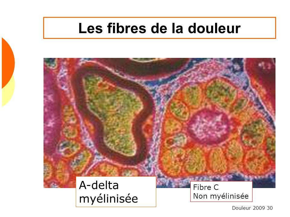 Douleur 2009 30 Les fibres de la douleur A-delta myélinisée Fibre C Non myélinisée
