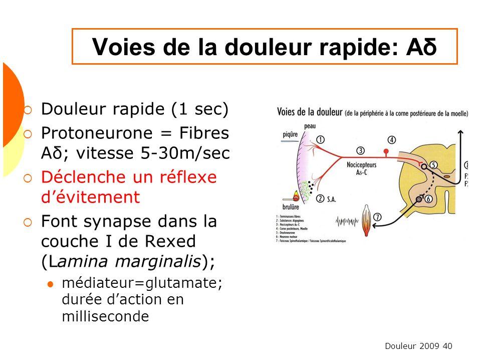 Douleur 2009 40 Voies de la douleur rapide: Aδ Douleur rapide (1 sec) Protoneurone = Fibres Aδ; vitesse 5-30m/sec Déclenche un réflexe dévitement Font