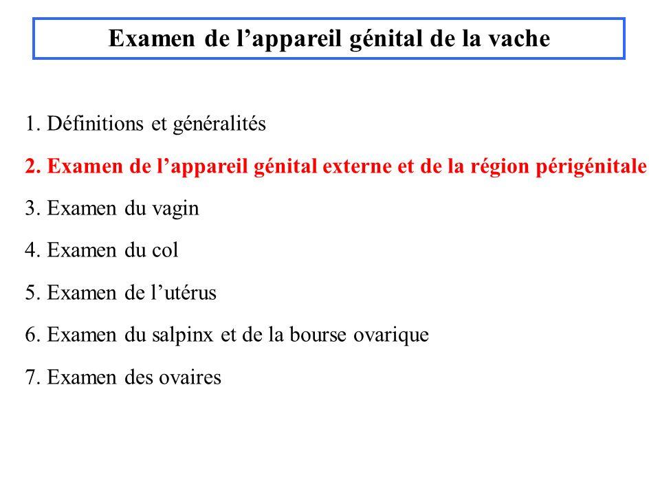 daprès Royal et al, 1981 6 ème mois de gestation 7 ème mois de gestation Palpation transrectale en fonction du stade de gestation daprès Royal et al, 1981 Placentomes de vache