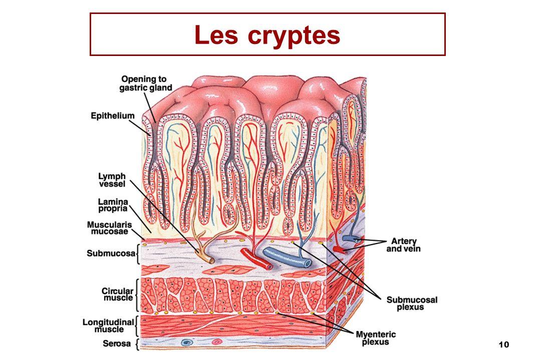10 Les cryptes