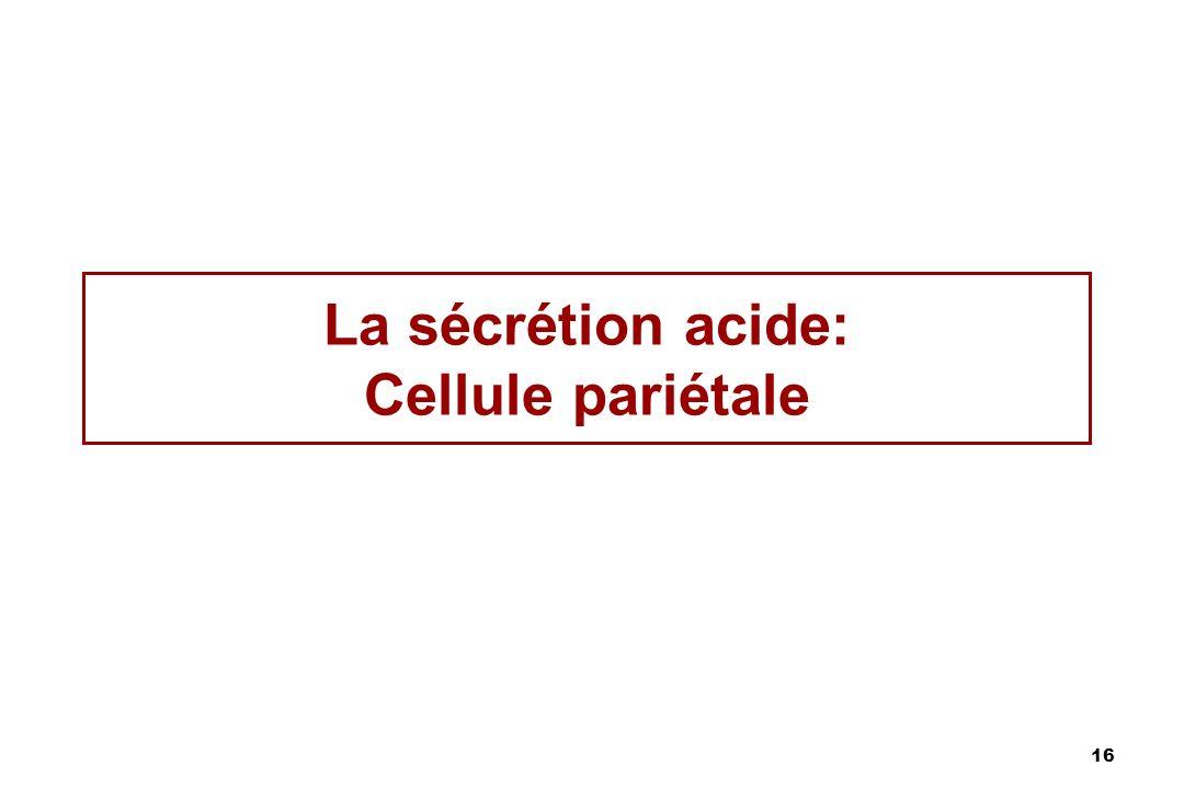 16 La sécrétion acide: Cellule pariétale