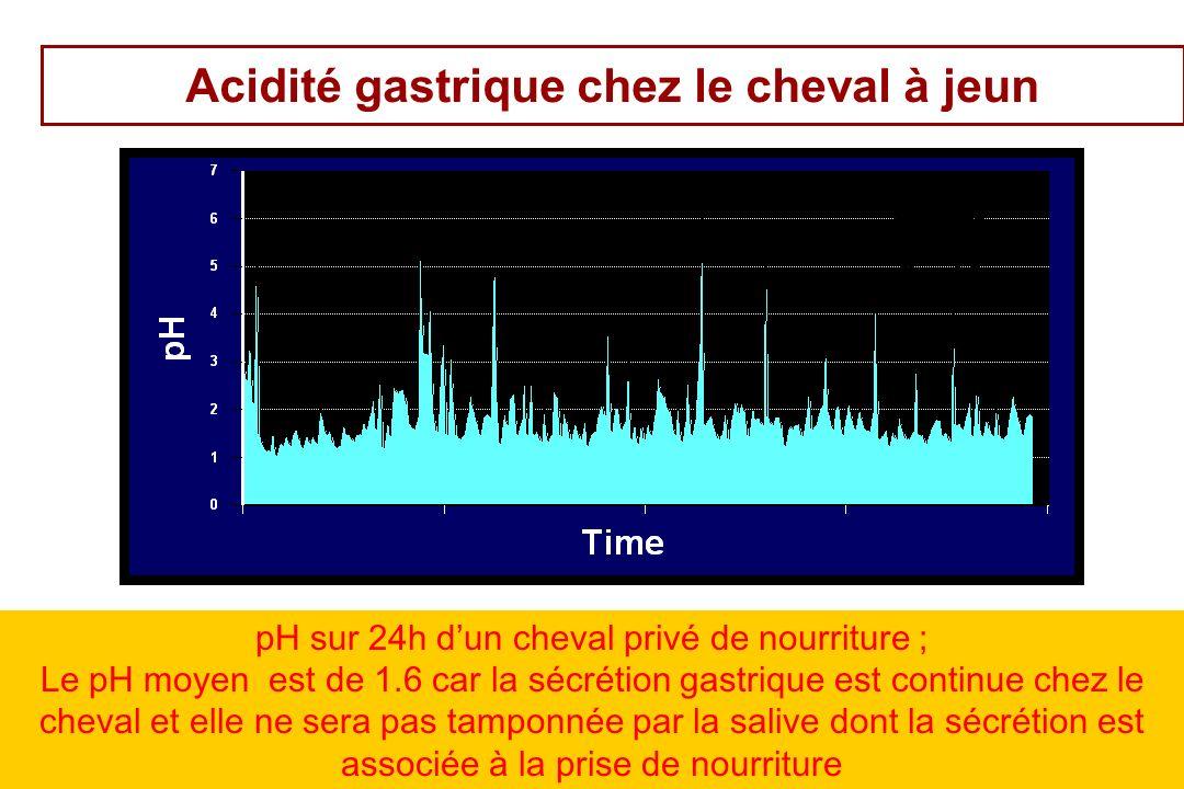 25 Acidité gastrique chez le cheval à jeun pH sur 24h dun cheval privé de nourriture ; Le pH moyen est de 1.6 car la sécrétion gastrique est continue