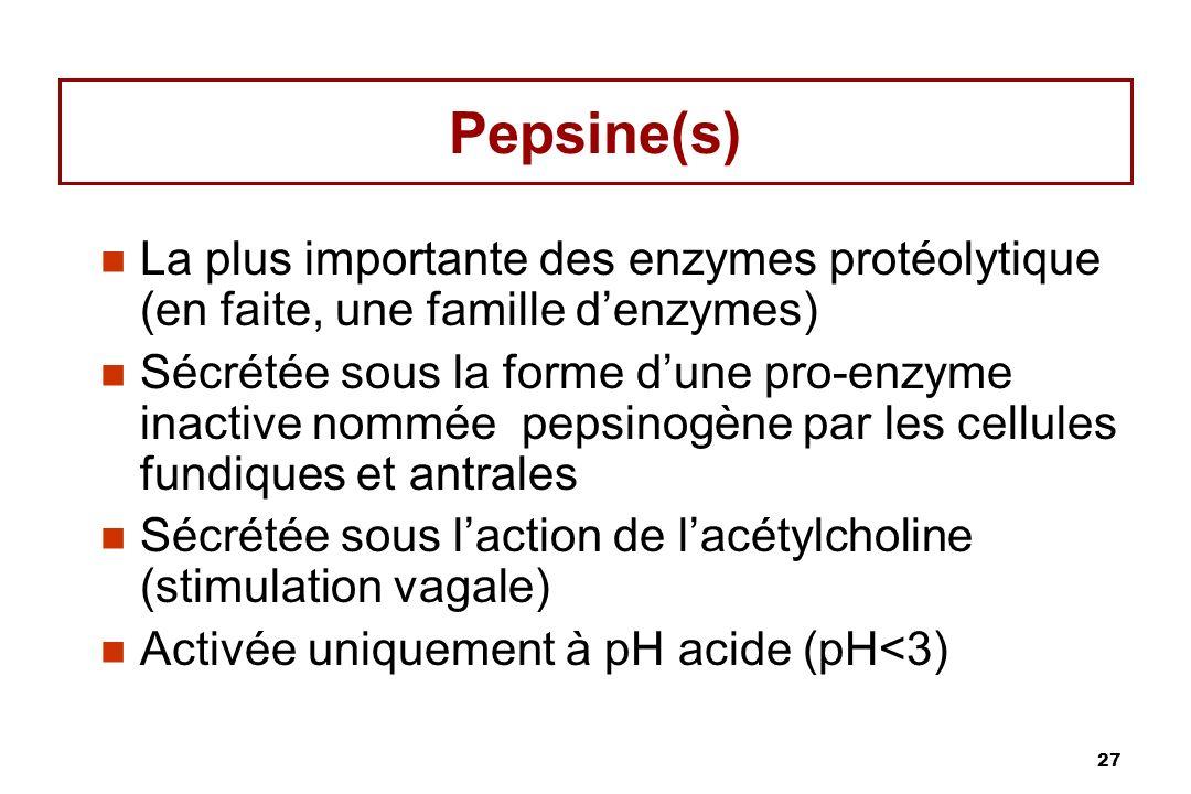 27 Pepsine(s) La plus importante des enzymes protéolytique (en faite, une famille denzymes) Sécrétée sous la forme dune pro-enzyme inactive nommée pep