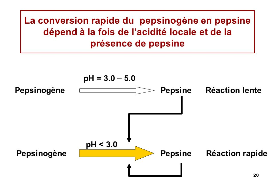 28 La conversion rapide du pepsinogène en pepsine dépend à la fois de lacidité locale et de la présence de pepsine Pepsinogène Pepsine pH = 3.0 – 5.0