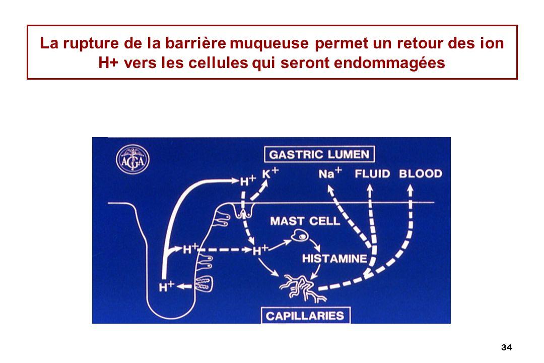 34 La rupture de la barrière muqueuse permet un retour des ion H+ vers les cellules qui seront endommagées