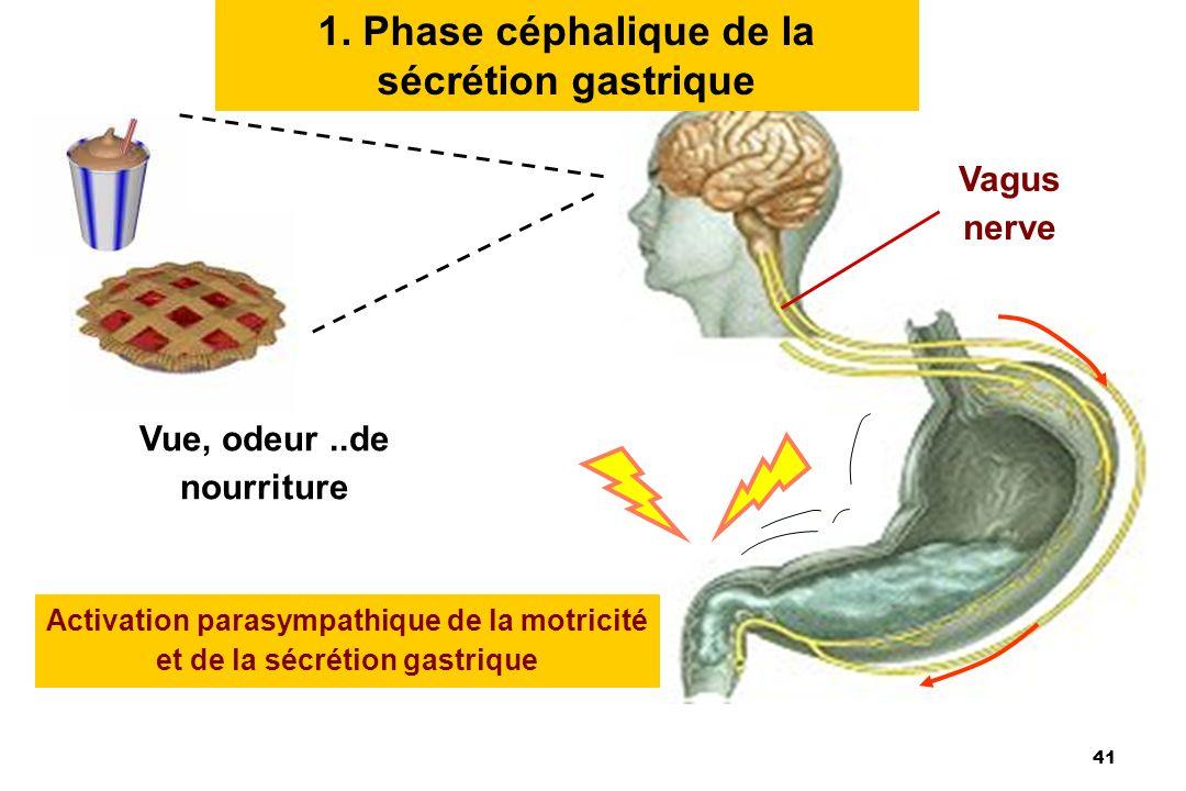 41 1. Phase céphalique de la sécrétion gastrique Vue, odeur..de nourriture Activation parasympathique de la motricité et de la sécrétion gastrique Vag