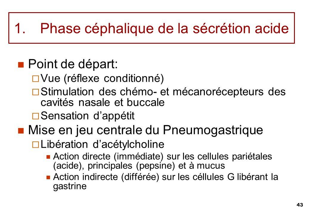 43 1.Phase céphalique de la sécrétion acide Point de départ: Vue (réflexe conditionné) Stimulation des chémo- et mécanorécepteurs des cavités nasale e