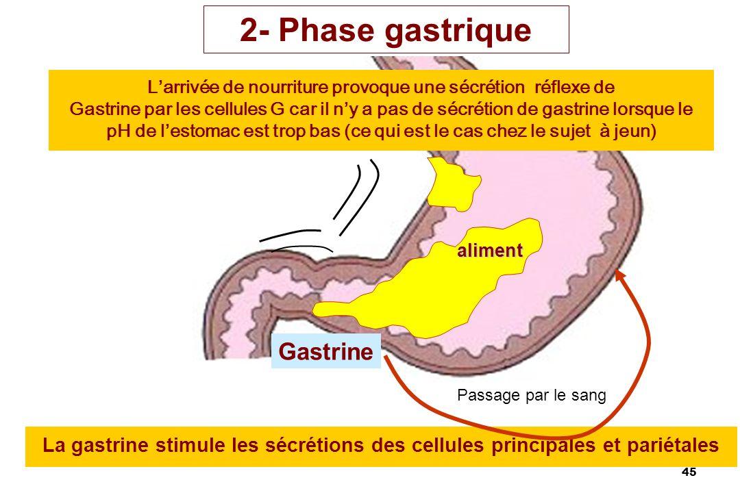 45 La gastrine stimule les sécrétions des cellules principales et pariétales 2- Phase gastrique Gastrine aliment Larrivée de nourriture provoque une s