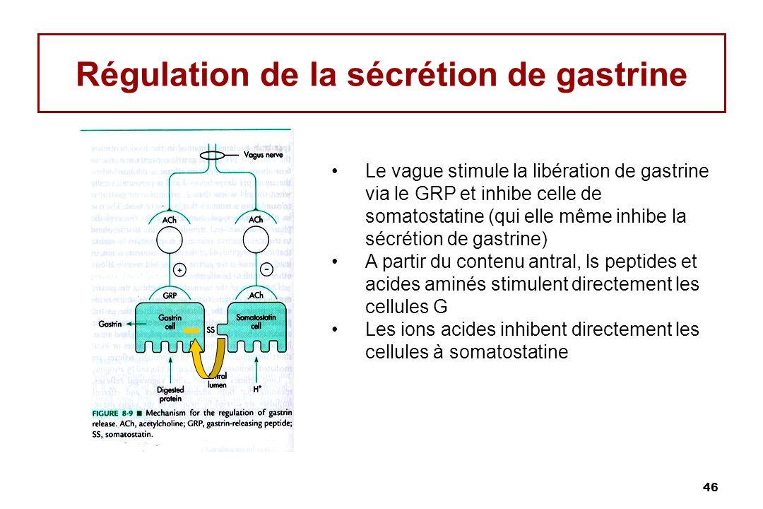 46 Régulation de la sécrétion de gastrine Le vague stimule la libération de gastrine via le GRP et inhibe celle de somatostatine (qui elle même inhibe