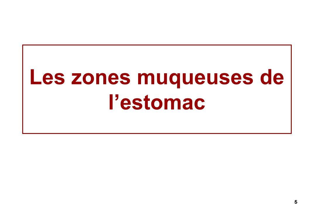 5 Les zones muqueuses de lestomac