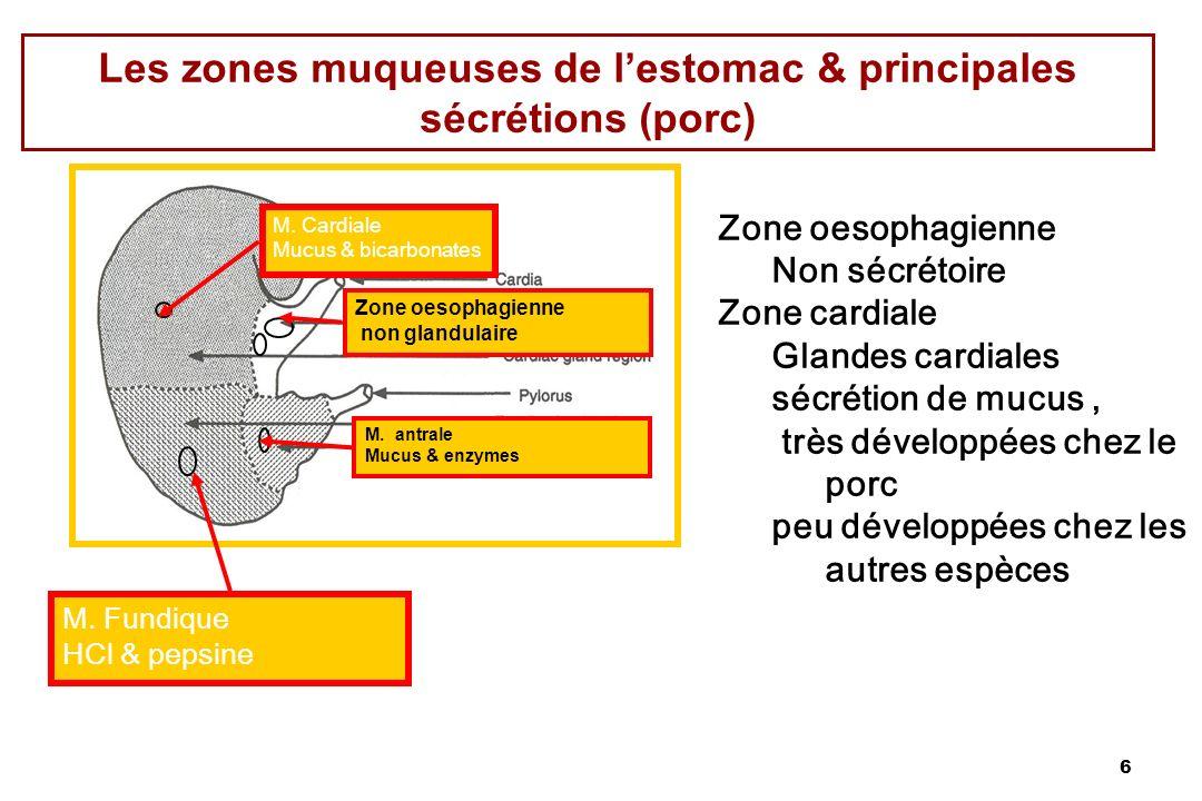6 Les zones muqueuses de lestomac & principales sécrétions (porc) Zone oesophagienne Non sécrétoire Zone cardiale Glandes cardiales sécrétion de mucus