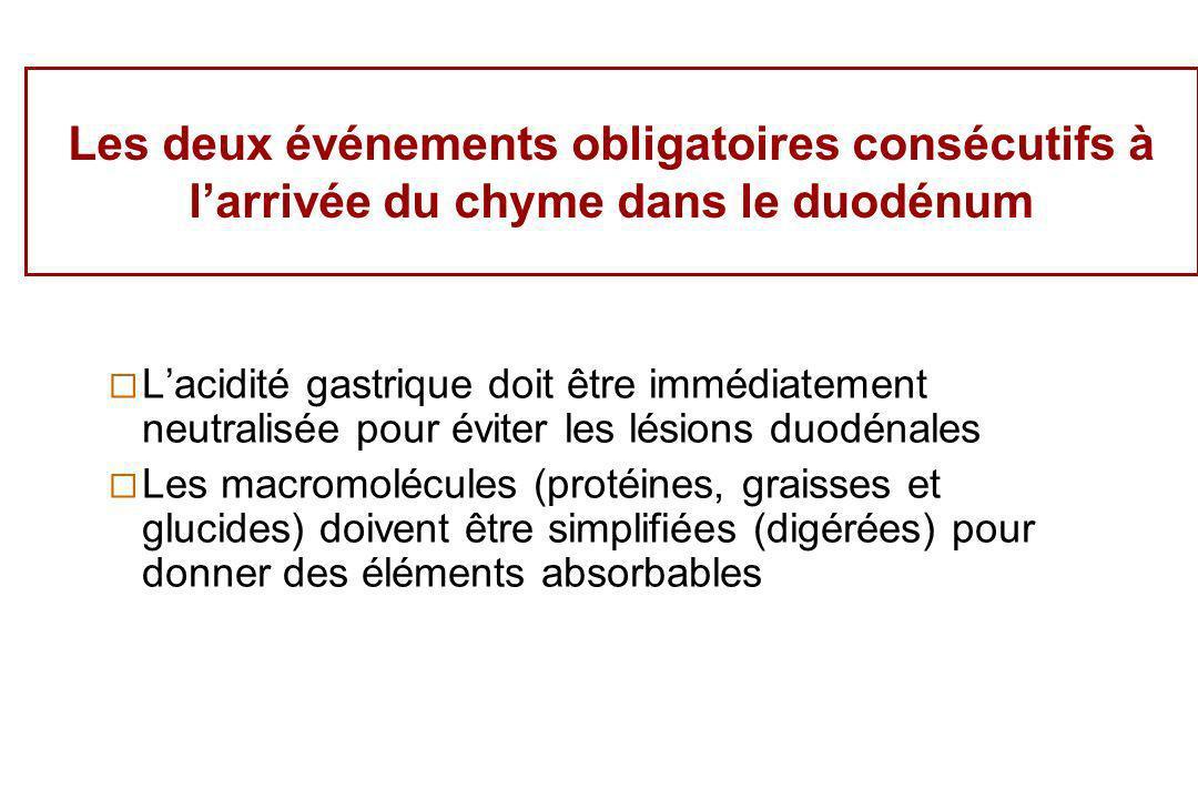 Les deux événements obligatoires consécutifs à larrivée du chyme dans le duodénum Lacidité gastrique doit être immédiatement neutralisée pour éviter l