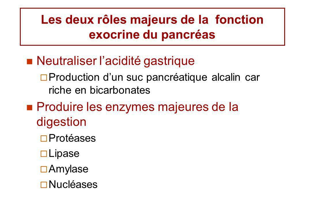 Neutraliser lacidité gastrique Production dun suc pancréatique alcalin car riche en bicarbonates Produire les enzymes majeures de la digestion Protéas