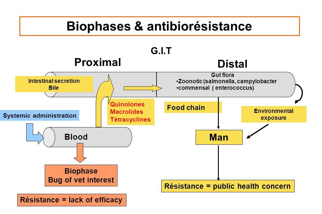 Biophases & antibiorésistance G.I.T Proximal Distal Intestinal secretion Bile Résistance = lack of efficacy Résistance = public health concern Biophas