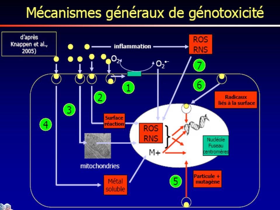 49 La génotoxicité