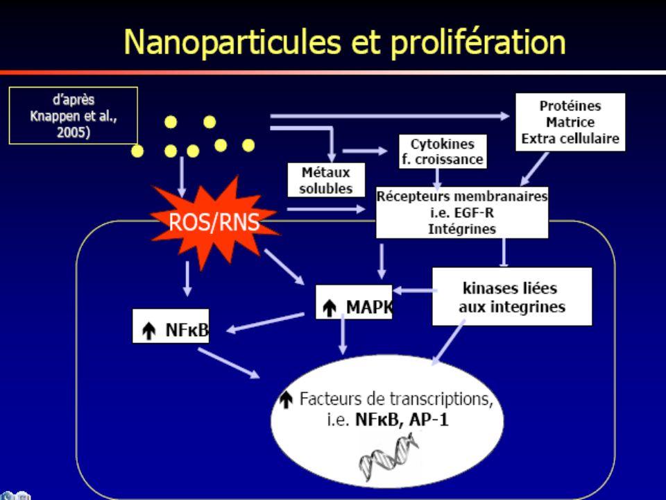 51 Le potentiel cancérogène : lévaluation du potentiel cancérogène des MNP est un débat ouvert : –Dune part en raison des dommages potentiels causés à lADN et des réactions inflammatoires quils induisent, et aussi de leur bioaccumulation, les MNP peuvent engendrer des processus tumoraux (poumons) –Dautre part les protocoles utilisés (2 ans, rongeurs) sont mal adaptés aux nanoparticules (métrologie, contrôle dexposition, etc.).