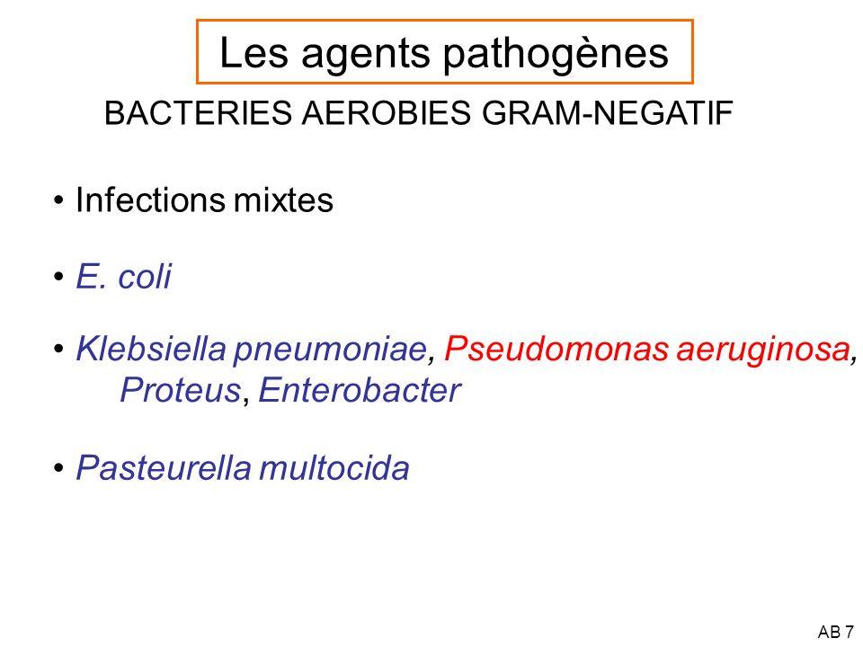 AB 8 BACTERIES ANAEROBIES Gram-positif :Peptostreptococcus anaerobius Actinomyces spp, Clostridium spp, Propionibacterium spp Gram-négatif :Bacteroïdes spp, B.