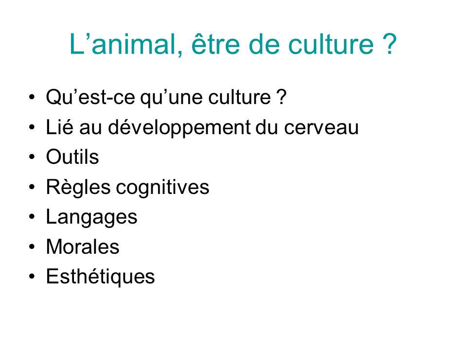 Lanimal, être de culture ? Quest-ce quune culture ? Lié au développement du cerveau Outils Règles cognitives Langages Morales Esthétiques