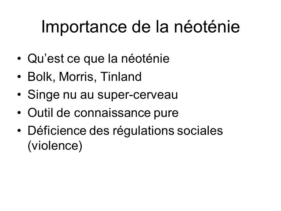 Importance de la néoténie Quest ce que la néoténie Bolk, Morris, Tinland Singe nu au super-cerveau Outil de connaissance pure Déficience des régulatio