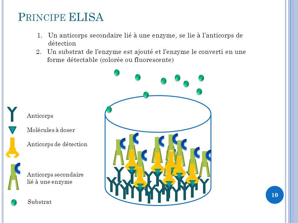 10 1.Un anticorps secondaire lié à une enzyme, se lie à lanticorps de détection P RINCIPE ELISA 2.Un substrat de lenzyme est ajouté et lenzyme le converti en une forme détectable (colorée ou fluorescente) Anticorps Molécules à doser Anticorps de détection Anticorps secondaire lié à une enzyme Substrat