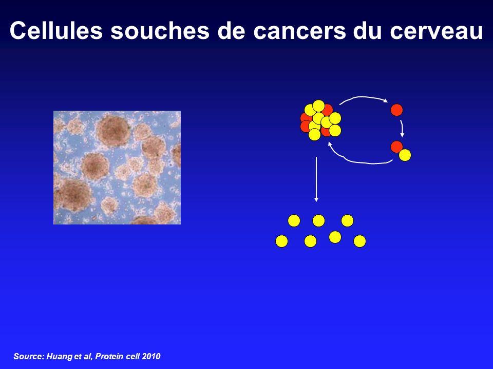 Cellules souches de cancers du cerveau Source: Huang et al, Protein cell 2010