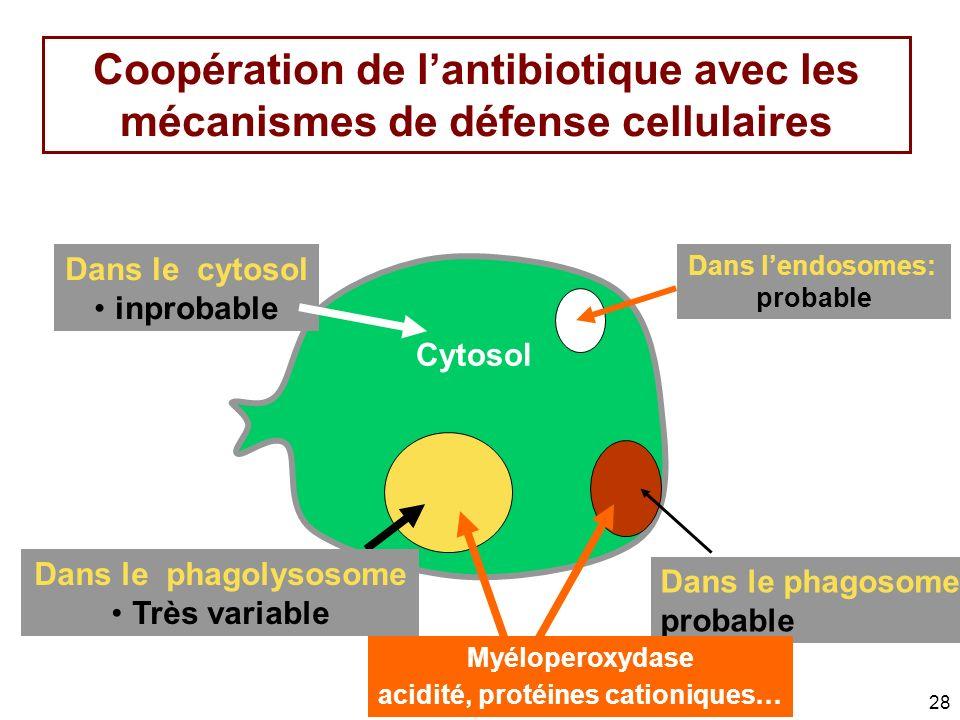 28 Coopération de lantibiotique avec les mécanismes de défense cellulaires Dans lendosomes: probable Dans le phagosomes probable Dans le cytosol inpro