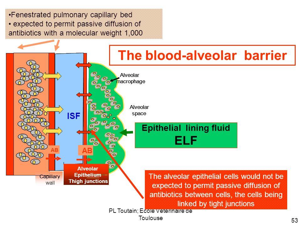 PL Toutain; Ecole Vétérinaire de Toulouse 53 The blood-alveolar barrier The alveolar epithelial cells would not be expected to permit passive diffusio