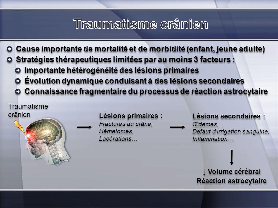 Cause importante de mortalité et de morbidité (enfant, jeune adulte) Traumatisme crânien Lésions primaires : Fractures du crâne, Hématomes, Lacération