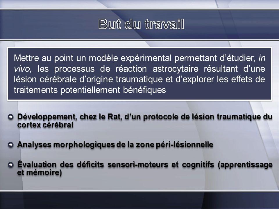 Développement, chez le Rat, dun protocole de lésion traumatique du cortex cérébral Analyses morphologiques de la zone péri-lésionnelle Évaluation des