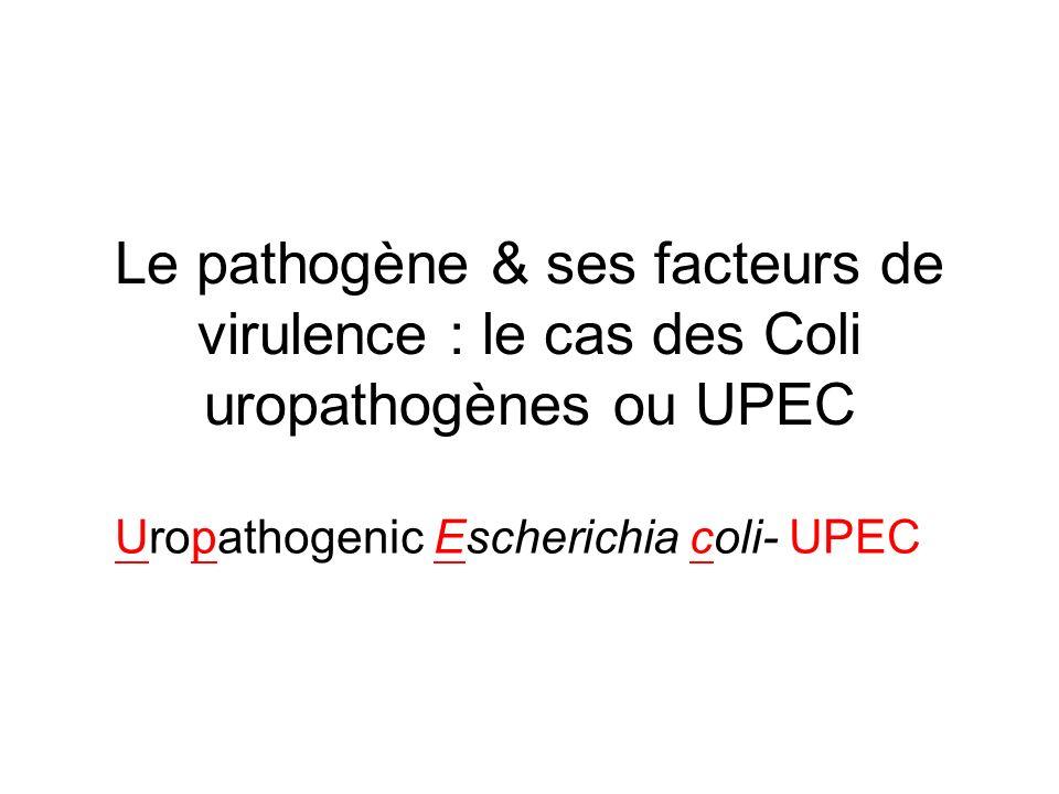 UPEC: Pathogénie Attachement aux cellules de lurothélium Réponse inflammatoire du TU Uropathogenic Escherichia coli- UPEC Possèdent des îlots de pathogénicité : codent pour des facteurs de virulence –Pili –Adhésines –Toxines –Hémolysines