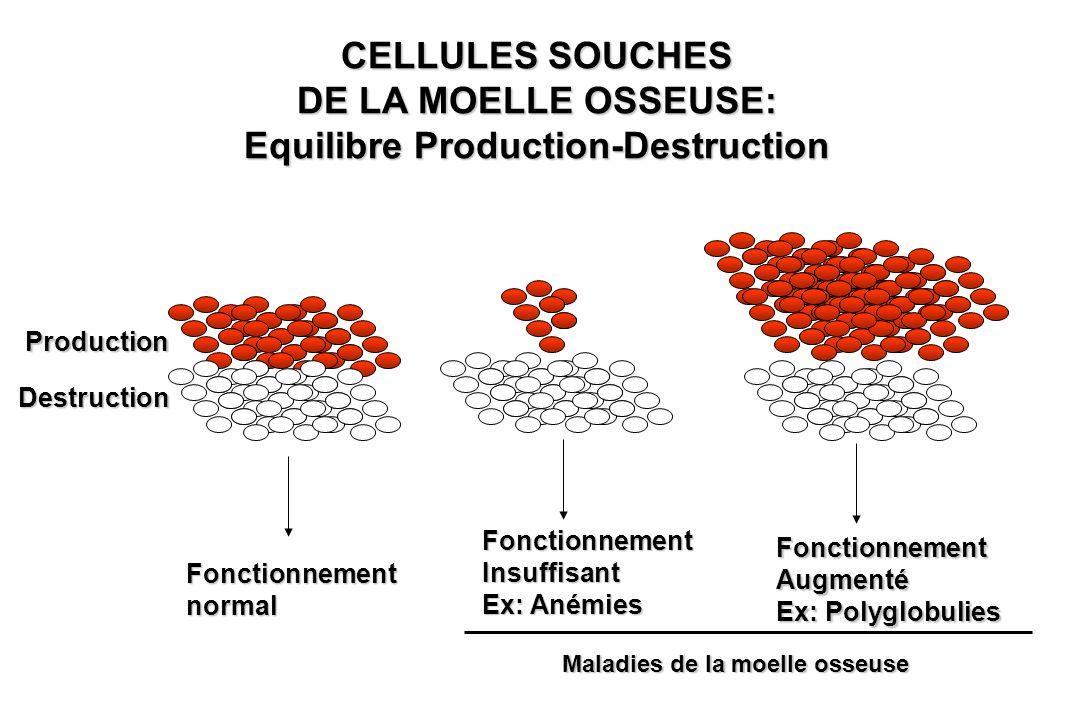 CELLULES SOUCHES DE LA MOELLE OSSEUSE: Equilibre Production-Destruction Production Destruction Fonctionnementnormal FonctionnementInsuffisant Ex: Aném
